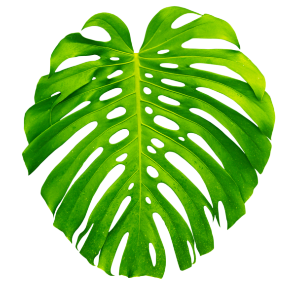 kissclipart-tropical-leaves-png-clipart-palm-trees-tropics ...